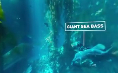 360° Diving Exploration of Kelp Forest Aquarium, BBC Big Blue Live